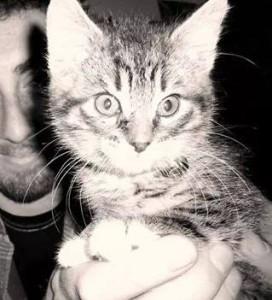 Cuchufli in kitten form