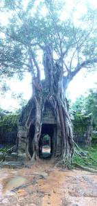 my favorite temple in Siem Reap, Cambodia!