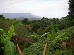 Haiti Here I Come