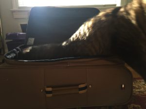 My beloved cat, Half Pint, approves of my new suitcase and has enjoyed playing in it over the past few weeks.