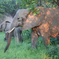 An Update on my Tanzanian Adventure
